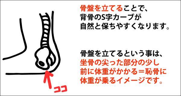 千葉県柏市 女性専用カラダケア整体院 骨盤・坐骨 正しい座り方